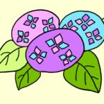 紫陽花 イラスト 書き方 手書き 簡単