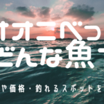 オオニベ wiki 味 価格 宮崎 石崎浜